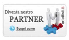 Info@ortottisti.it