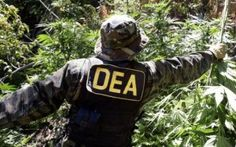 Colorado: Denver Police, Federal Agents Conduct Large Raids On Marijuana Grows -   See more at: http://hemp.org/news/node/4221#sthash.UuLfGHKc.onkg1sum.dpuf