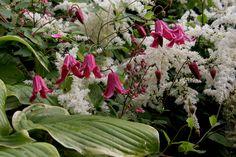 Betsy's garden in New York--click through for more photos of this garden