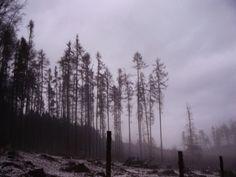 #mist #naturelovers #forest #famillytrip #walking Večerní perokresba.❄️☁️💧👌#klubkocestuje