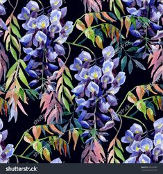 Глицинии цветок. Акварель бесшовные узор глициния. Ручная роспись иллюстрации на черном фоне