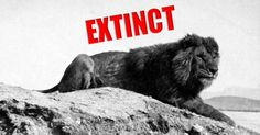 Fur, Feathers, and Ferns requirement 2: Here's Every Single Animal That Became Extinct In The Last 100 Years (photos!)