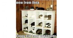 ikea-cats-shelf-meme