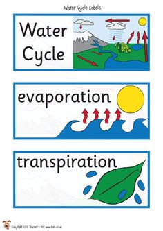 Teacher's Pet - FREE Classroom Display Resources for Early Years (EYFS), Key Stage 1 (KS1) and Key Stage 2 (KS2) Water Cycle Activities, Eyfs Activities, Science Activities, Weather Activities, Science Experiments, Fourth Grade Science, Kindergarten Science, Middle School Science, School Displays