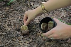 Used tea bags are a gardener's secret weapon! Your How-To: Toss them into the compost, toss them into holes (as shown in the photo below), or sprinkle the dried tea leaves into your soil. Organic Gardening, Gardening Tips, Vegetable Gardening, Gardening Zones, Garden Soil, Used Tea Bags, Plantation, Growing Plants, Diy Hacks