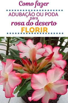 Manual, Healthy Deserts, Sewing Aprons, Desert Rose, Wheels, Gardening, Weather, Garden, Plants