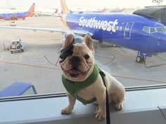 Understanding the best practices for traveling with pets is an important step in your travel plans. Bringing snacks, water and the best carriers are just a few of Manny the Frenchie's essential pet travel tips.