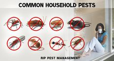 What Are The 4 Common Household Pests? Household Pests, Pest Management, Pest Control, Insects, Rodents, Ceilings, Living Rooms, Bugs, Opportunity