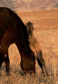 """I feel like this picture sums up being a parent across species. """"Hey mom, are you trying to eat? Let me just lean on you for a minute."""" #Horse #Kids #ParentLife"""
