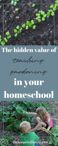 Why you want to be teaching gardening in your homeschool. The many reasons to teach the skill of gardening go much further than just healthy home-grown food!