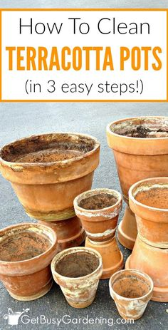 How To Clean Terracotta Pots (Clean Clay Pots In 3 Easy Steps! Horticulture, Potted Plants, Indoor Plants, Container Gardening, Gardening Tips, Beginners Gardening, Indoor Gardening, Clean Pots, Terracotta Plant Pots