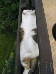 cat sleeping - wow, in the gutter