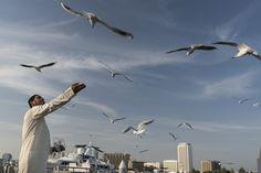 FEEDING FRENZY: A man fed seagulls in Dubai on Friday. (ITAR-Tass/Zuma Press)