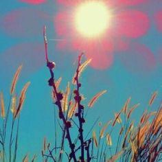 Wheat field sun
