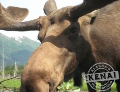 Alaska Wildlife Conservation Center is a great place to visit during your Alaska Vacation.