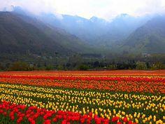 Srinagar is the summer capital of Jammu & Kashmir state of India…
