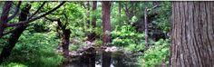 Cypress Valley Zipline Canopy Tours