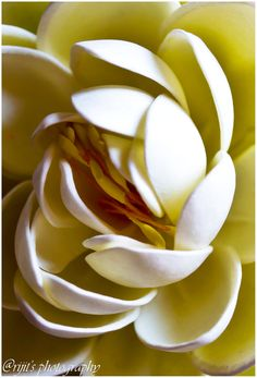~~ Lotus story by Arijit Bose ~~