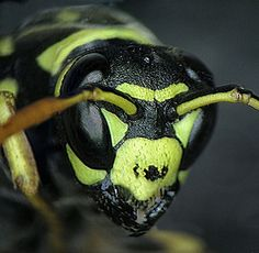 """Photo """"Wasp"""" by lilewis 