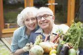 ti0800052 Senior couple holding organic vegetables