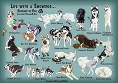 Things I adore about the Siberian Husky Dogs Malamute Husky, Alaskan Malamute, Husky Puppy, Siberian Husky Facts, Siberian Huskies, Animals And Pets, Funny Animals, Cute Animals, Dressage