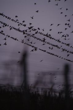 birds song above the vineyards