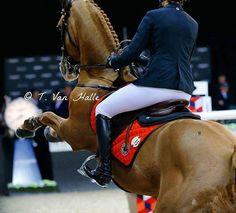 Horsealot photographie • Horsealot Tiffany Van Halle