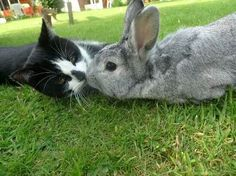 Cats and Friends in awkward situations★ Lovely Cats
