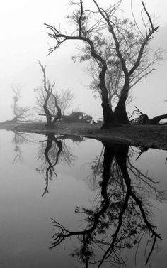 Il est des paysages qui guérissent de toutes les blessures.  Danielle Steel