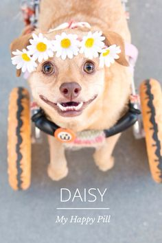 Daisy ( oh.....such a sweet little thing!)