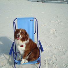 Sheba at the beach