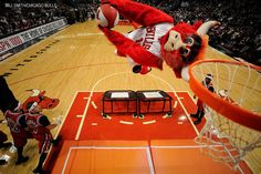 The official website of Benny The Bull, the mascot of the Chicago Bulls Benny The Bull, Chicago Bulls Team, Nba Basket, Basketball Stuff, Home Team, Chiropractic, 4 Life, Daddy, Fan