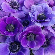 Flowers and Gardening. Helpful Organic Gardening Information, Advice, And Tips. Tending to an organic garden can be a highly rewarding and calming activity that anyone can participate in. Dubai Garden, Singapore Garden, Fresh Flowers, Purple Flowers, Beautiful Flowers, Bouquet Champetre, Anemone Flower, Purple Garden, Grow Organic
