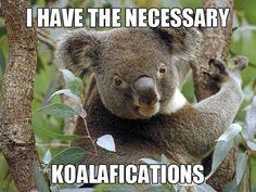 Koalafications! #meme #funny #koala #animal #lol