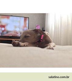 #dog #salatino #clubesalatino #canil #perro #dogs #cute #love #nature #animales…