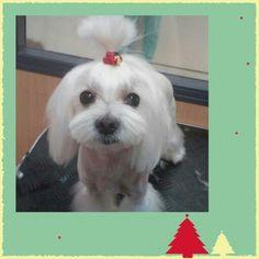 Lulu en la peluqueria.CV EME