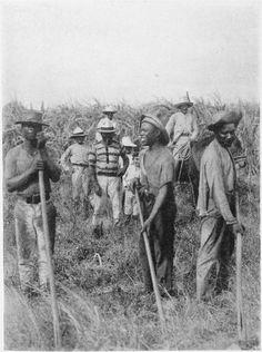 Sugar Cane workers - Campesinos, Cuba