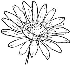 Step finished daisies Drawing the Daisy : How to Draw Daisies with Easy Step by Step Lessons