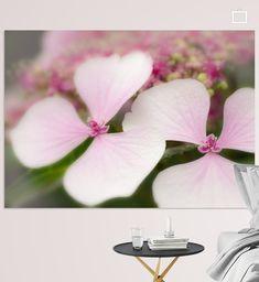 Hortensia in roze