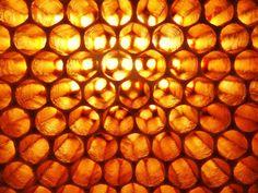 Architecture de la ruche