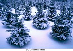 This is what I think of when I think of magical Christmas trees.