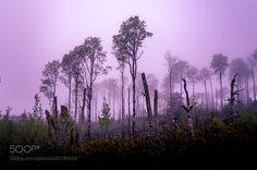 Tree Fog by Lako #Landscapes #Landscapephotography #Nature #Travel #photography #pictureoftheday #photooftheday #photooftheweek #trending #trendingnow #picoftheday #picoftheweek