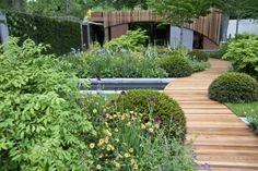 Chelsea flower show 2015 – in pictures   Life and style   The Guardian