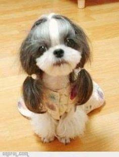 Do you like my hairstyle? Sometimes I feel like this!