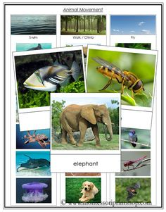 Free Animal Movement Cards - Swim, Walk, Fly from Montessori Print Shop
