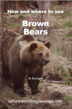 Bear-watching – Nature-watching in Europe Survival Quotes, Survival Life, Wilderness Survival, Survival Prepping, Survival Skills, Survival Gear, Survival Gadgets, Emergency Preparedness, Hiking Guide