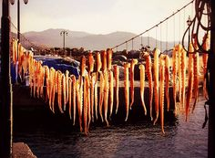 Octopus in Mytilene! Athens, Octopus, Counting, Vineyard, Greece, Relax, Magic, In This Moment, Travel