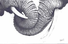 Detailed photo realistic elephant pencil drawing by Nadia Coker