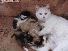 Koťátka. - obrázek číslo 1