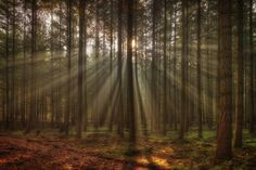 Photograph forest by Anke Kneifel on 500px